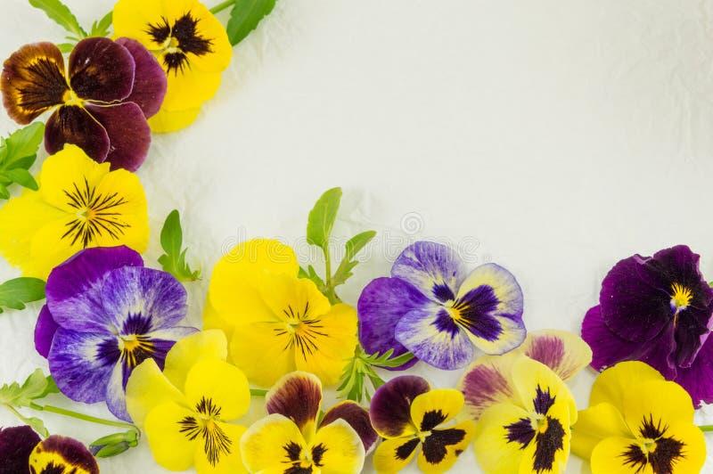 Желтые и фиолетовые цветки стоковое фото rf