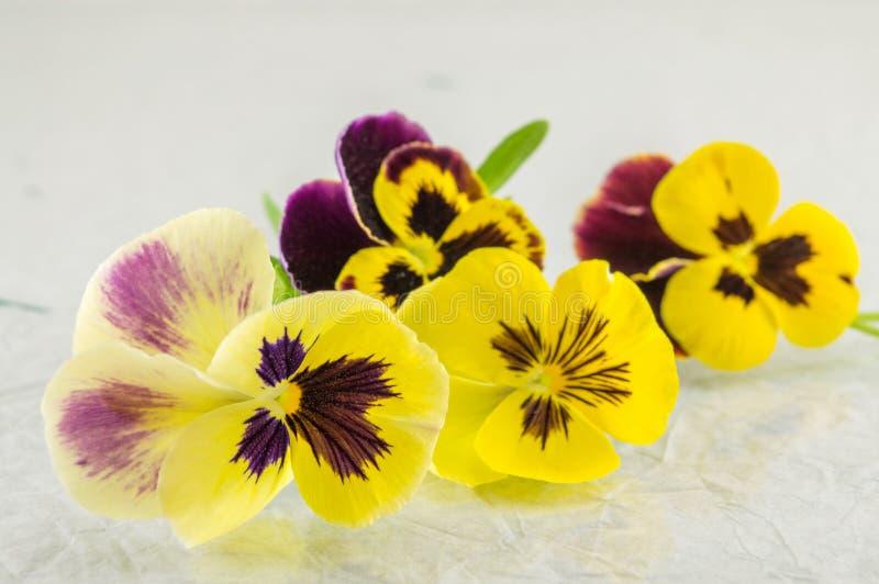 Желтые и фиолетовые цветки стоковые изображения