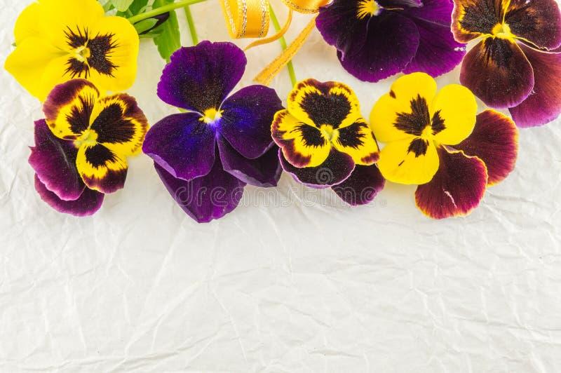 Желтые и фиолетовые цветки стоковые фотографии rf