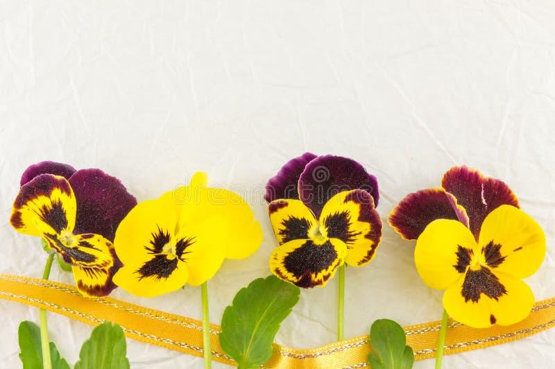 Желтые и фиолетовые цветки стоковое фото