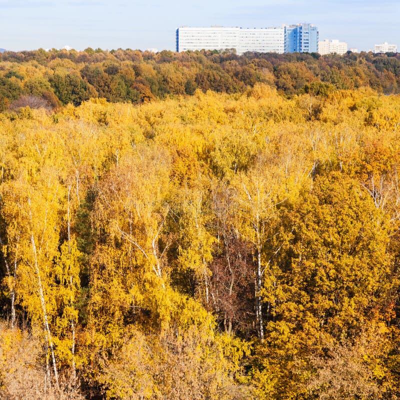 Желтые древесины и большой современный дом в дне осени стоковое фото rf