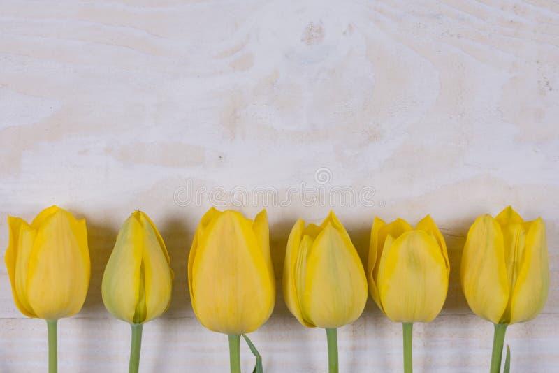 Желтые тюльпаны над белой деревянной предпосылкой с copyspace стоковое фото rf