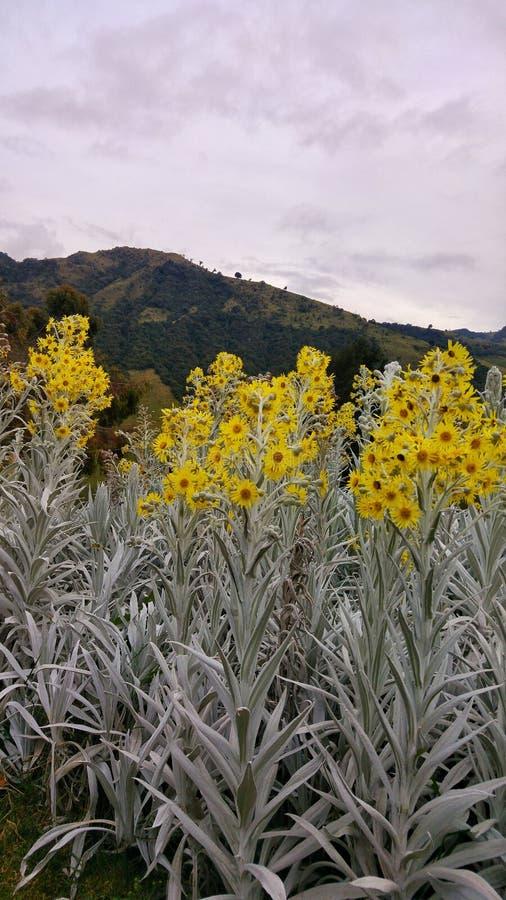 Желтые цветки в колумбийском месте стоковая фотография rf