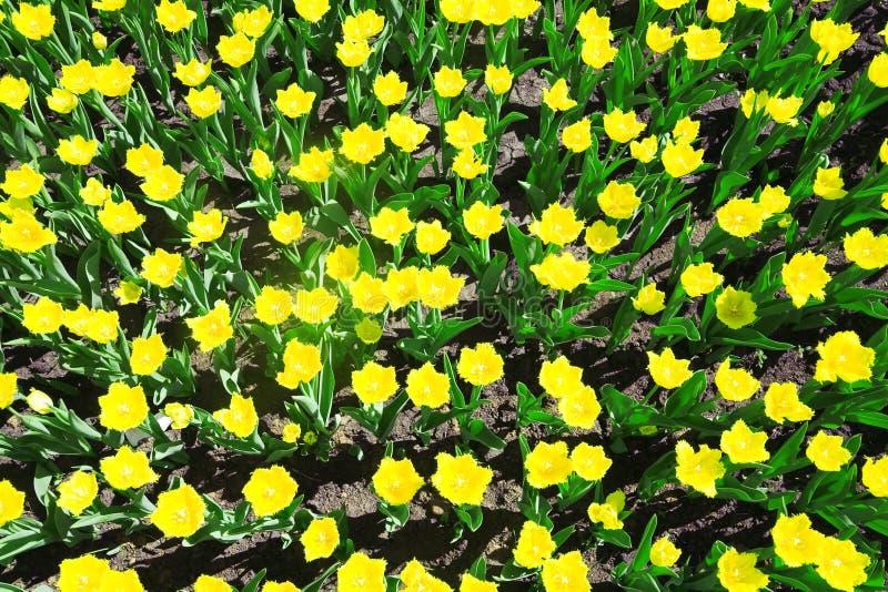 Желтые цветки лета стоковые фото