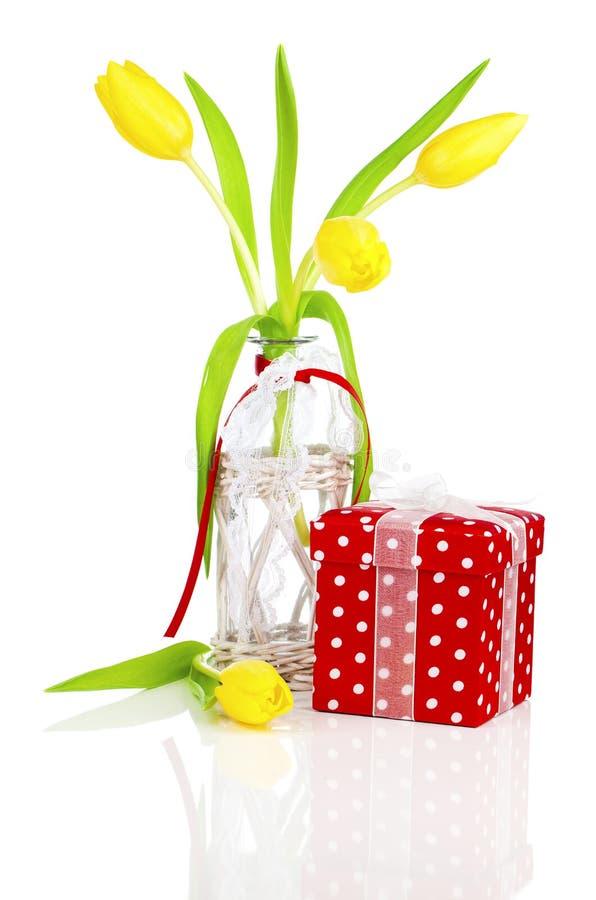 Желтые цветки тюльпанов весны с красной подарочной коробкой стоковое фото