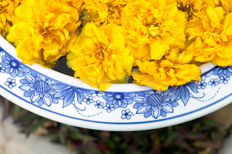 Download Желтые цветки стоковое фото. изображение насчитывающей сезон - 37928386