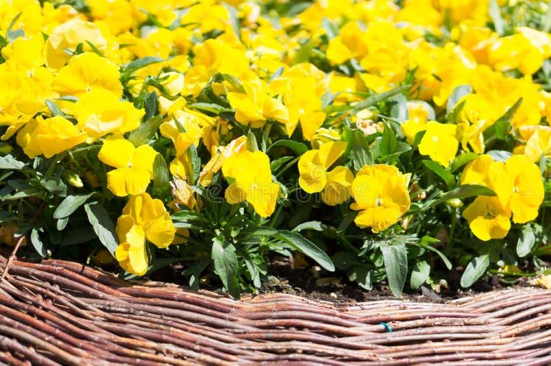 Download Желтые цветки стоковое фото. изображение насчитывающей флора - 40584074