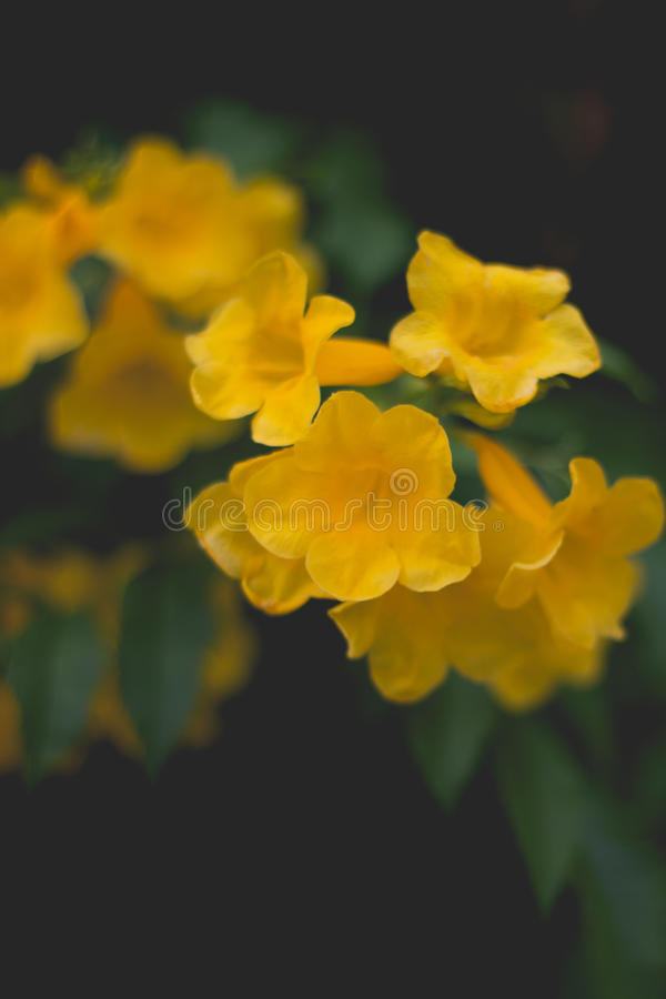 Желтые цветки стоковое фото