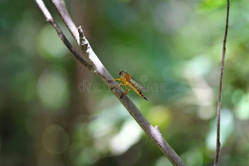 Желтые 6-шагающие насекомые над деревом стоковое изображение rf