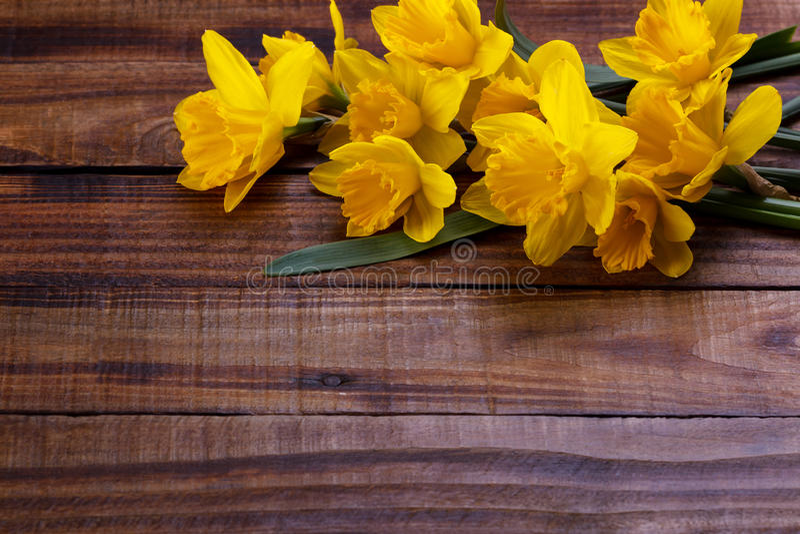 Желтые narcissus или daffodil стоковое фото rf