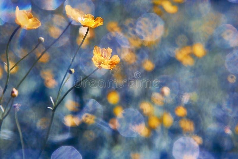 Желтые wildflowers лютик Предпосылка лета и весны стоковое изображение rf