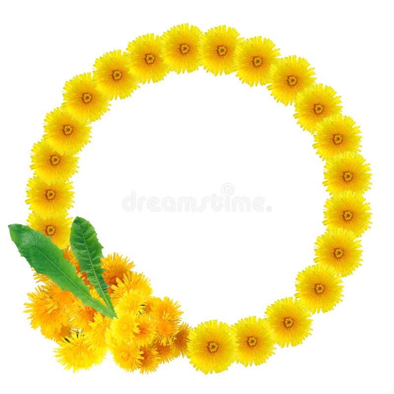 Желтый венок одуванчиков стоковые фото