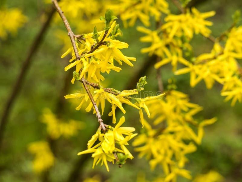 Желтый куст стоковые фото
