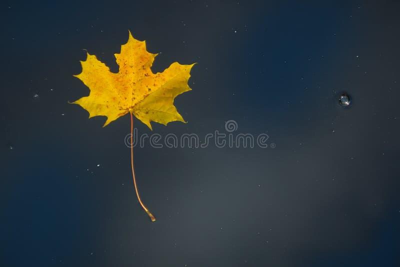 Желтый кленовый лист на воде стоковое изображение rf