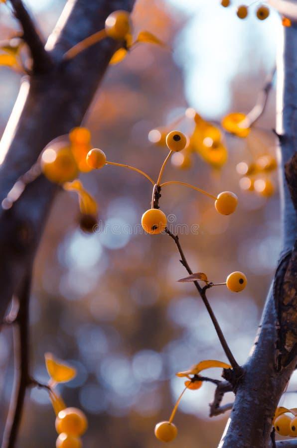 Желтый плодоовощ стоковое фото rf