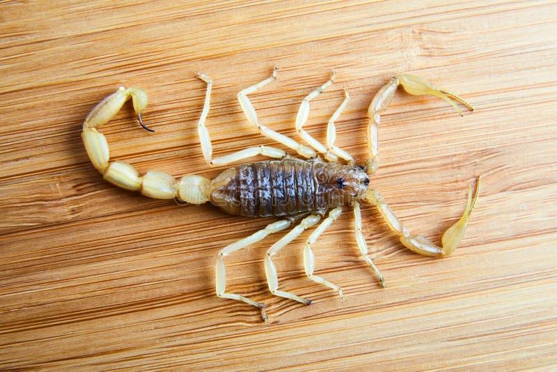Желтый скорпион на бамбуковой доске стоковое изображение