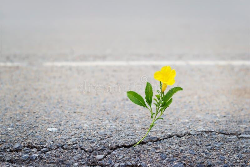 Желтый цветок на великолепной улице стоковые фото