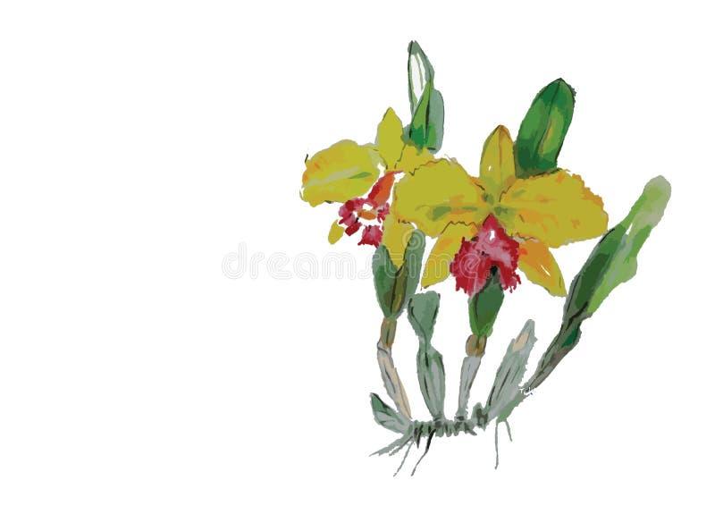 Желтый цветок орхидеи желтый цветок с папоротником на белой предпосылке бесплатная иллюстрация