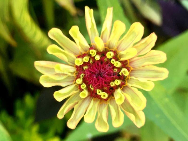 Фото цветка с красным центром 30