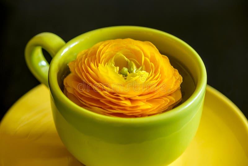 Желтый цветок лютика в чашке с поддонником стоковое изображение rf