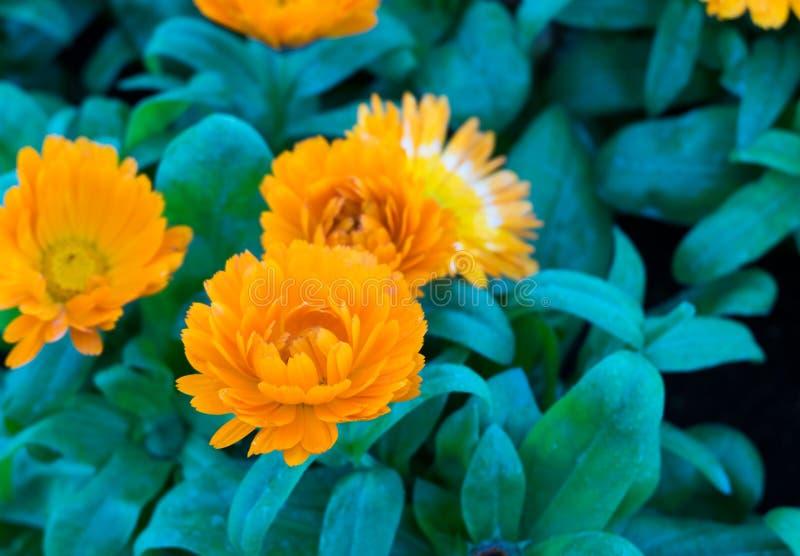 Желтый цветок стоковые изображения