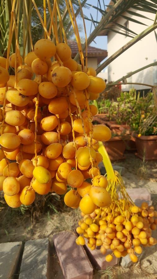 Желтый цвет датирует свежую стоковое фото rf