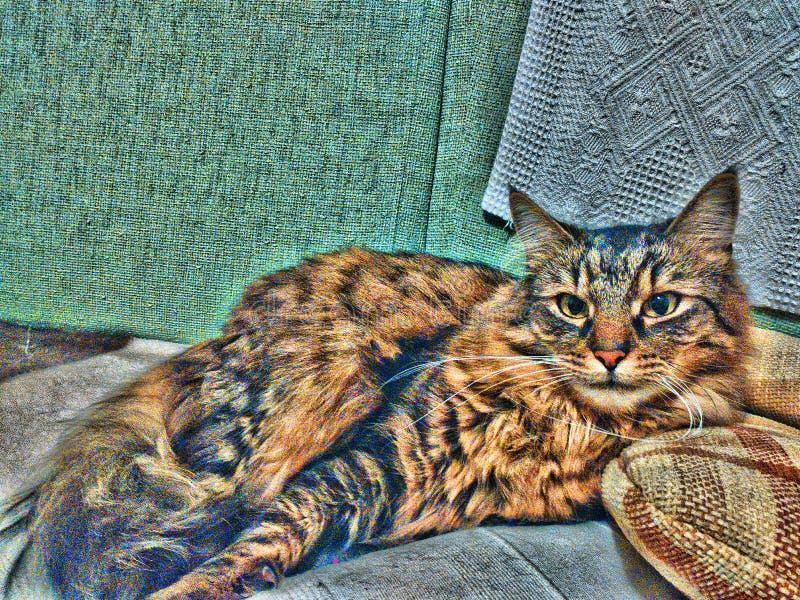 желтый цвет вектора иллюстрации кота шаржа стоковое фото rf