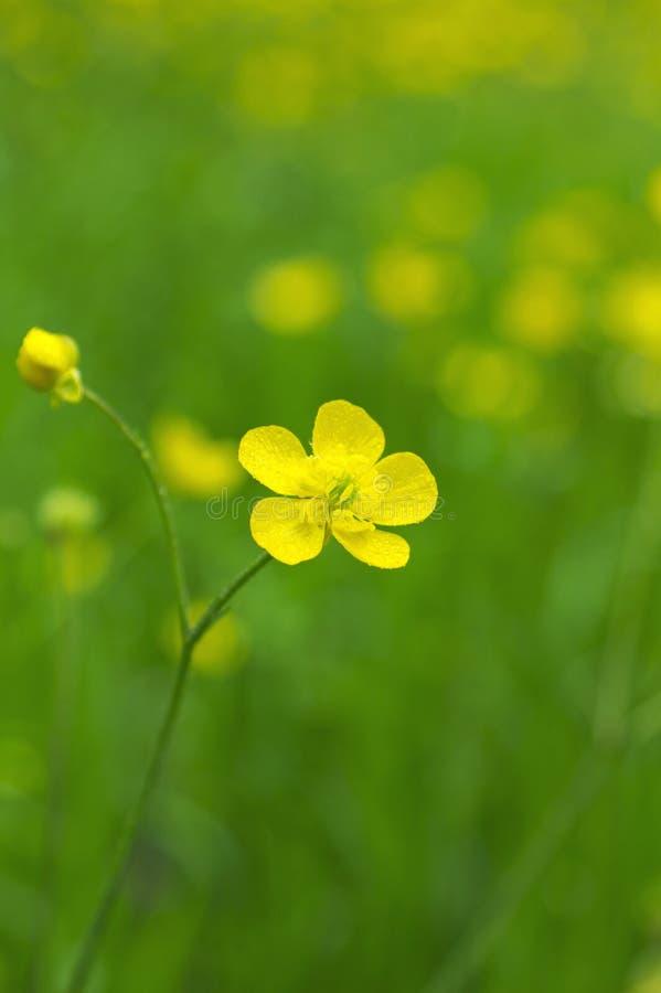 Download желтый цвет весны лужка одуванчиков предпосылки полный Стоковое Фото - изображение насчитывающей backhoe, поле: 40578852