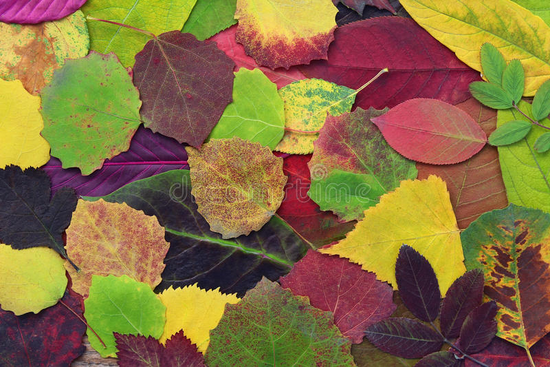 Желтый цвет, зеленый и красный цвет выходят деревья и другие заводы стоковое изображение rf