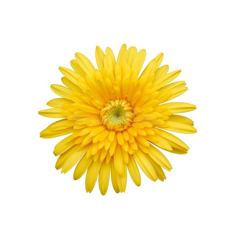 желтый цвет изолированный цветком белый стоковые фото