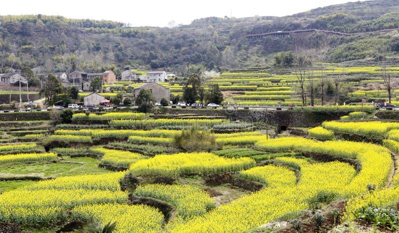 Желтый цвет и зеленые растения составляют привлеченное изображение, много посетителей стоковые фото