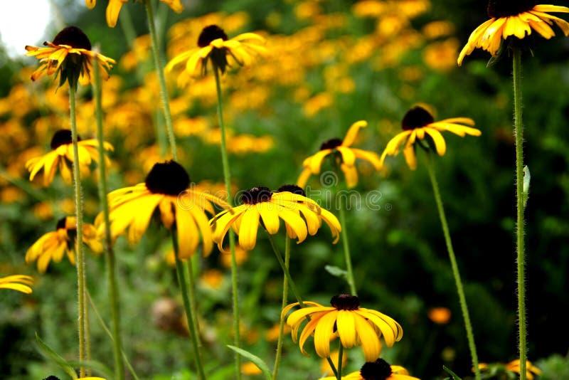 Желтый цвет собрал цветки стоковые изображения rf