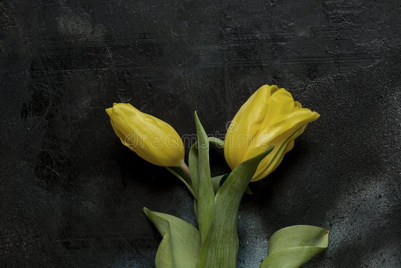 желтый цвет тюльпанов предпосылки черный стоковые изображения