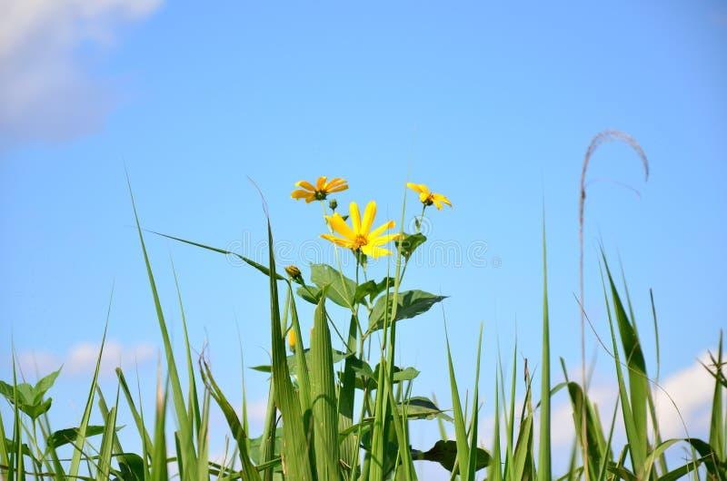 Желтый цвет цветет осень стоковое фото