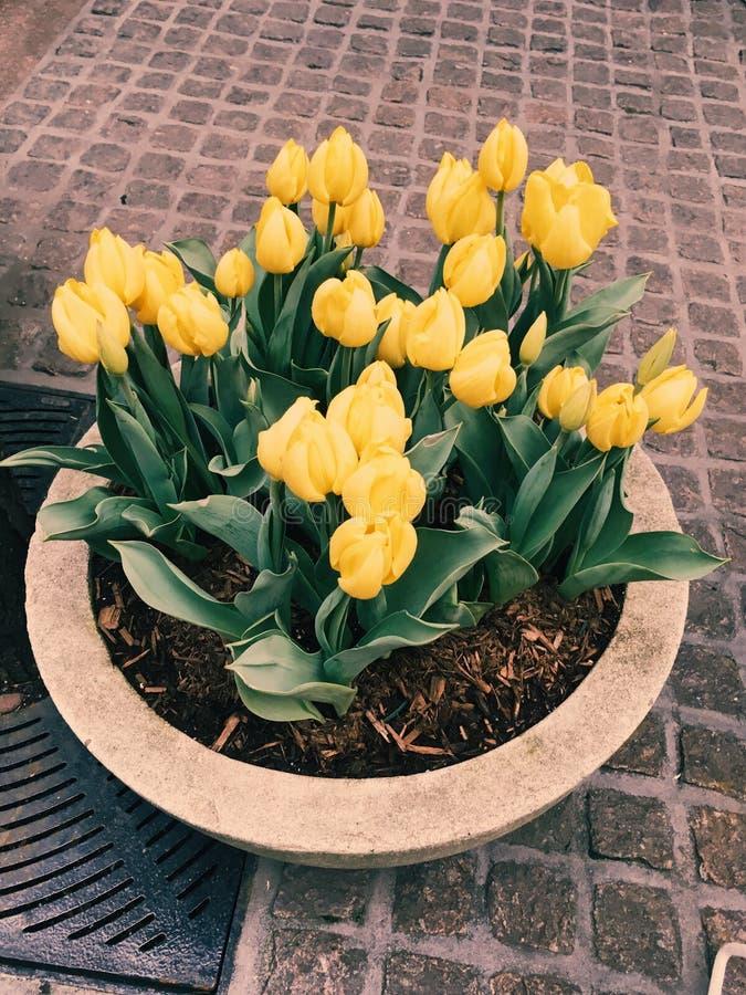 Желтый цвет для вашей бабушки стоковое изображение rf