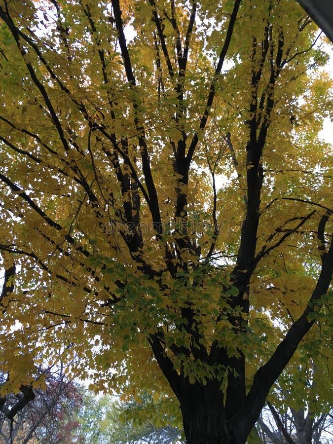 Желтый цвет 3 стоковые фото