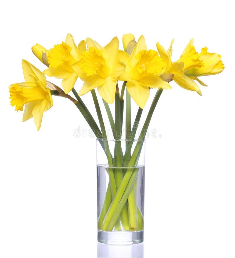 Желтый narcissus в прозрачной изолированной вазе, стоковые фотографии rf