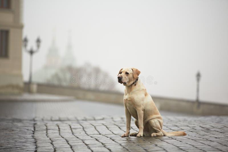 Собака в улице стоковая фотография rf