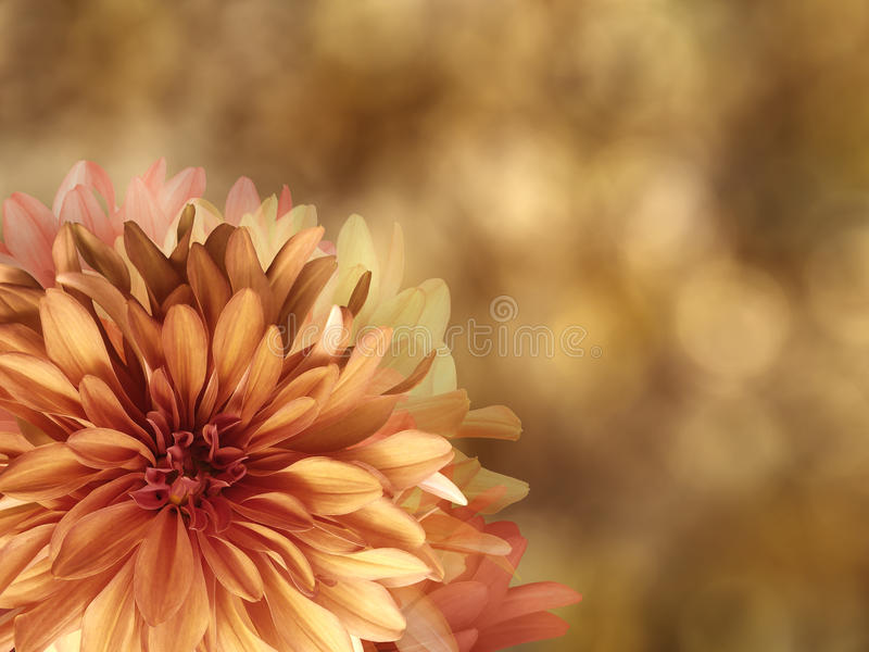 Желт-красные цветки осени, на золоте запачкали предпосылку closeup Яркий флористический состав, карточка на праздник коллаж  иллюстрация вектора