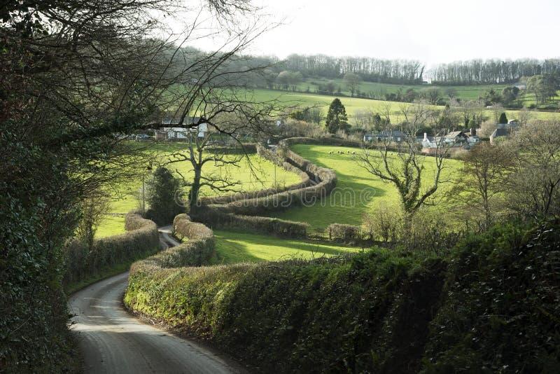 Живая изгородь вдоль майны страны в Девоне Англии Великобритании стоковое изображение