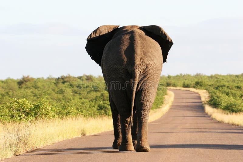 живая природа Африки s южная стоковое фото