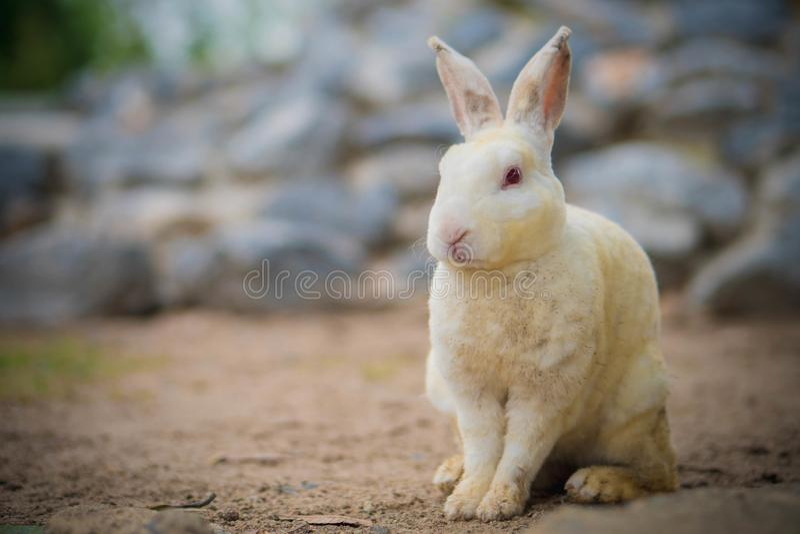 Живая природа кролика небольшая стоковое фото