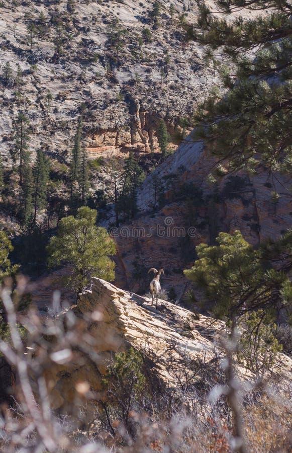 Живая природа национального парка Сион во время похода стоковое фото rf