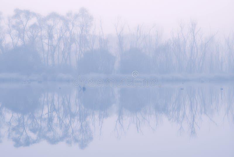 Живая природа на восходе солнца в тумане стоковое изображение rf