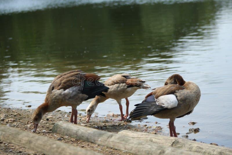 Живая природа озера стоковое фото rf