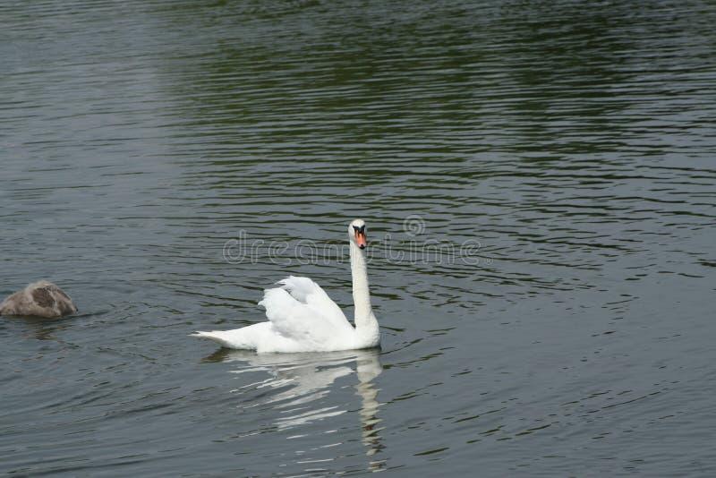 Живая природа озера стоковое фото