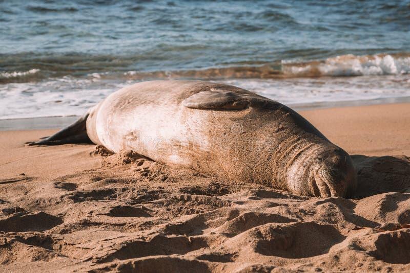 Живая природа отдыхая среди людей на пляже стоковое фото rf