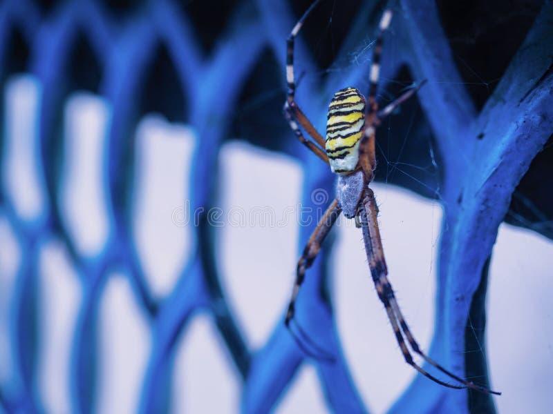Живая природа живой природы паука стоковое изображение