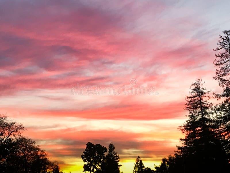 Живое небо захода солнца силуэта дерева стоковые изображения