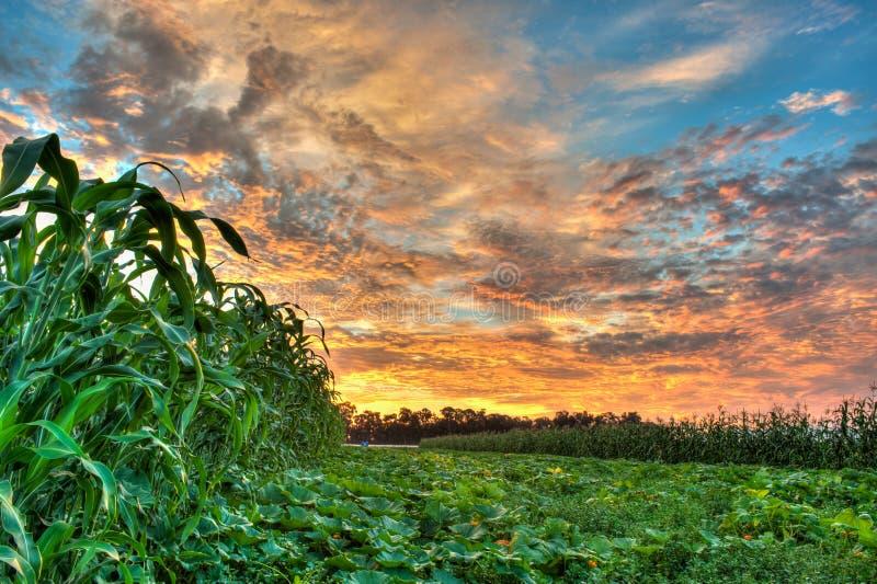 Живое небо над заплатой тыквы стоковые фотографии rf